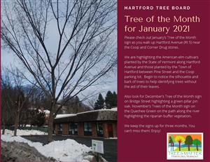 Hartford Tree Board January Tree of the Month
